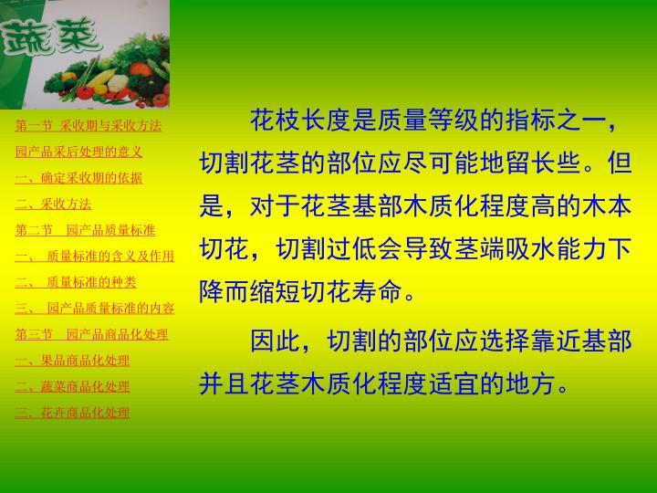 花枝长度是质量等级的指标之一,切割花茎的部位应尽可能地留长些。但是,对于花茎基部木质化程度高的木本切花,切割过低会导致茎端吸水能力下降而缩短切花寿命。