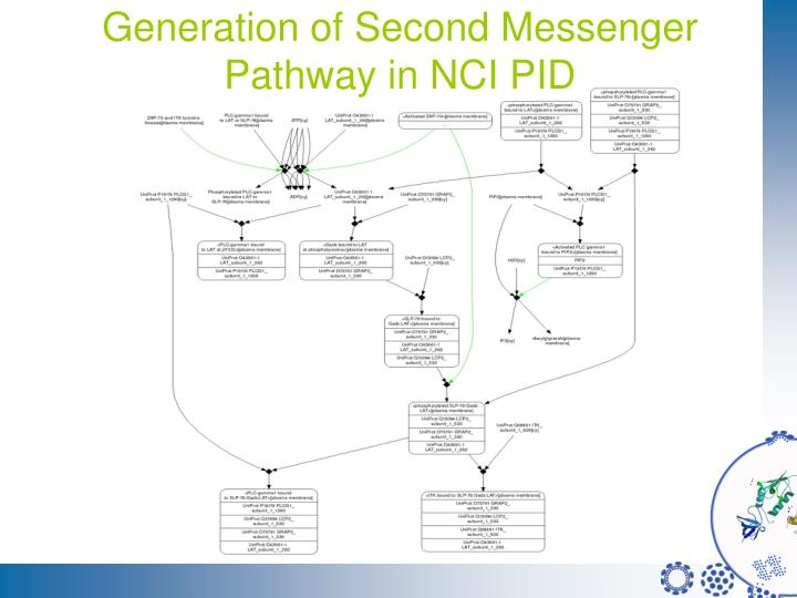 Generation of Second Messenger Pathway in NCI PID