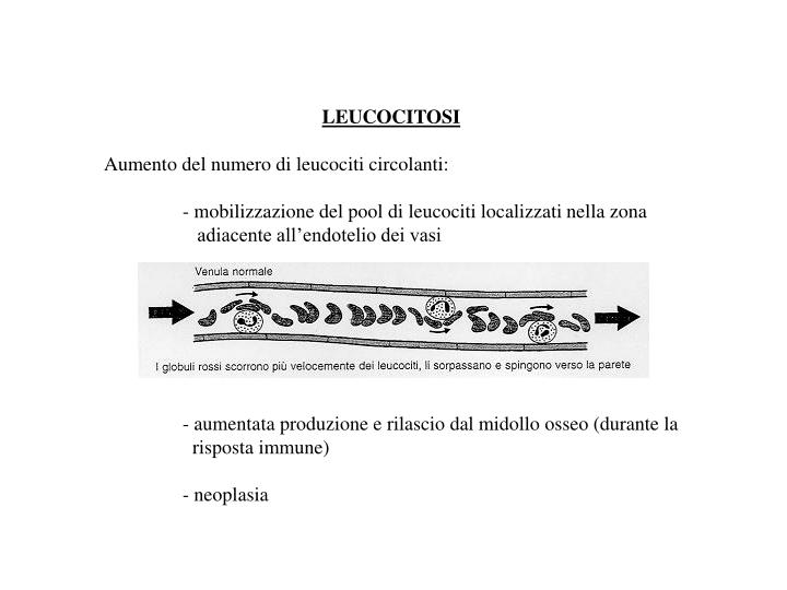 LEUCOCITOSI