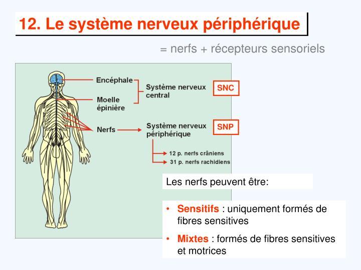 Les nerfs peuvent être: