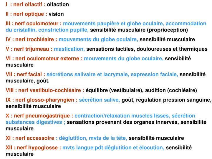 I  : nerf olfactif :