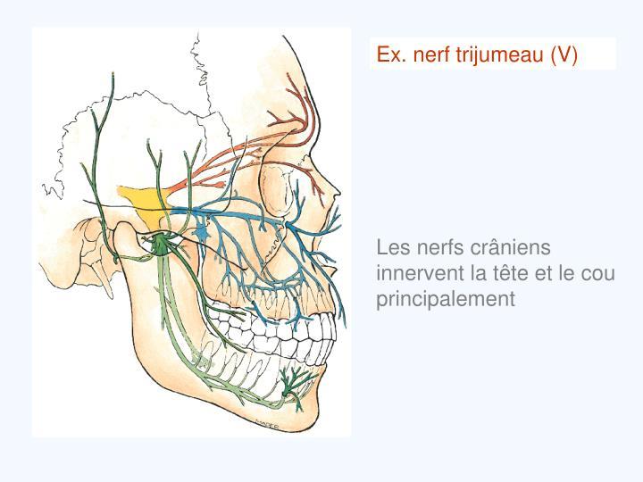 Ex. nerf trijumeau (V)