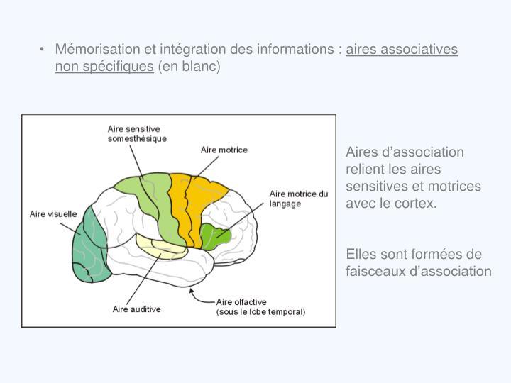 Mémorisation et intégration des informations :