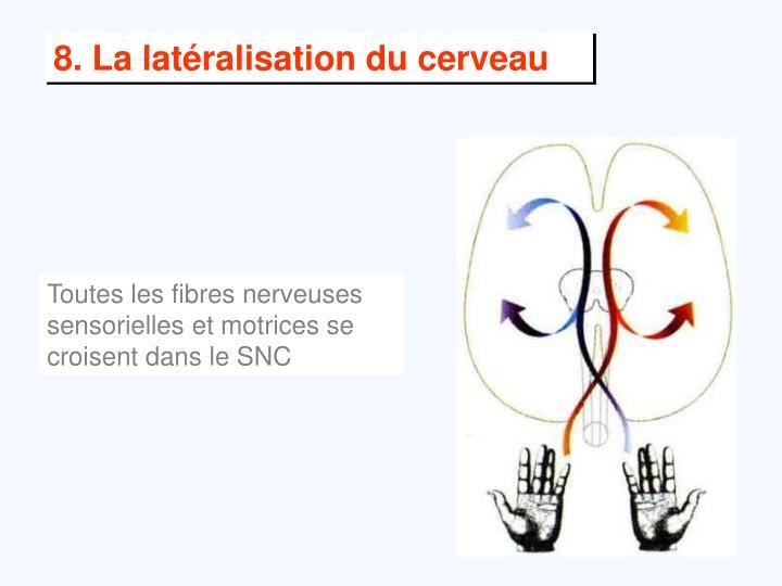 8. La latéralisation du cerveau