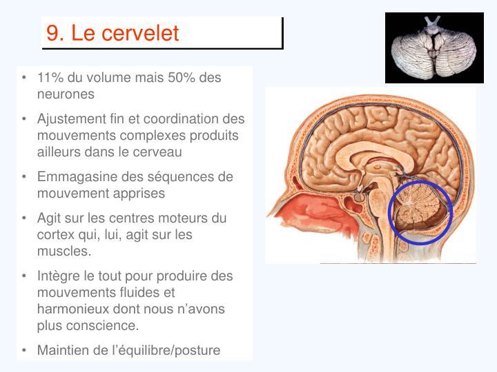 9. Le cervelet