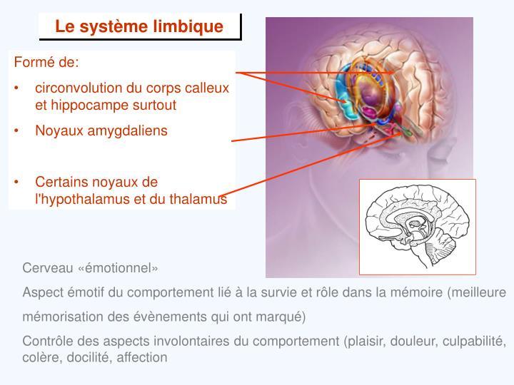 Le système limbique