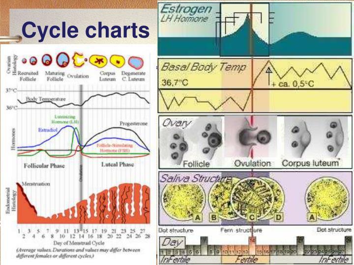 Cycle charts
