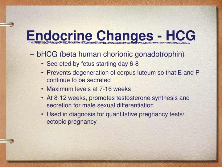 Endocrine Changes - HCG