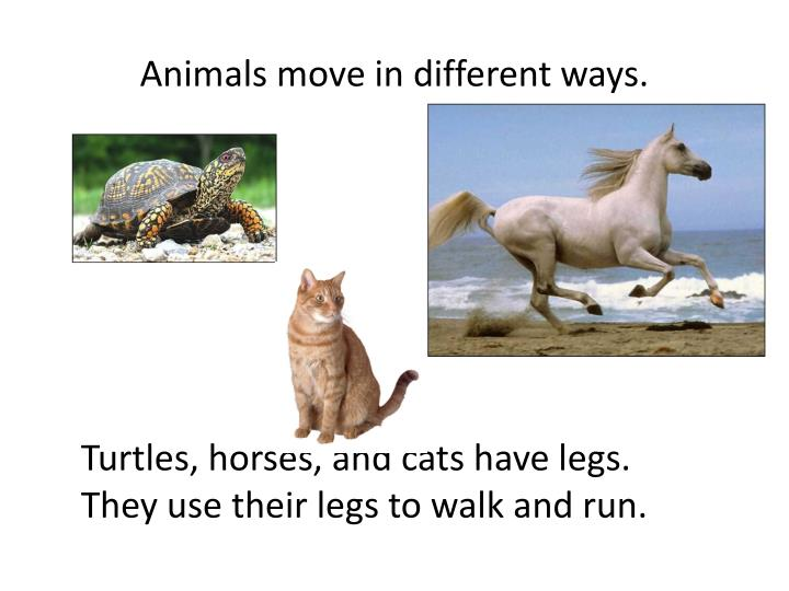 Animals move in different ways.