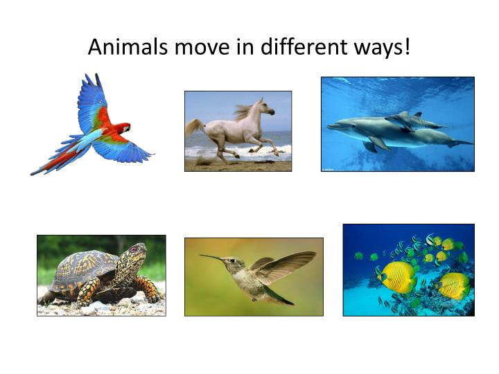 Animals move in different ways!