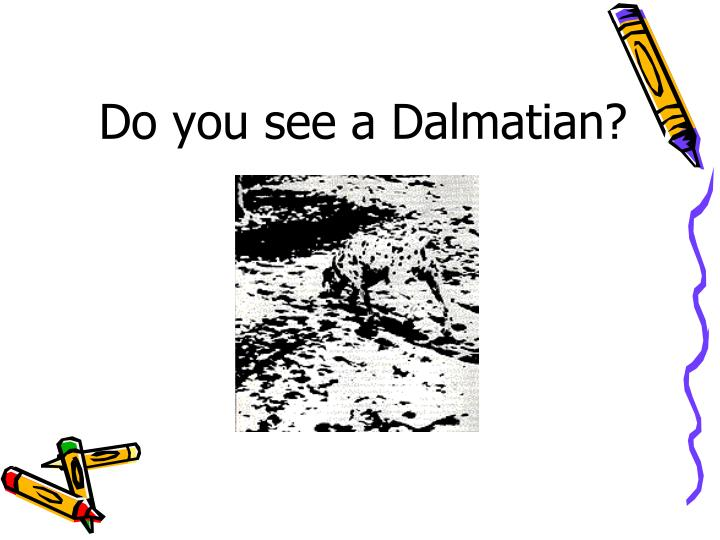 Do you see a Dalmatian?