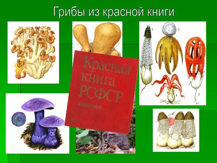Грибы из красной книги