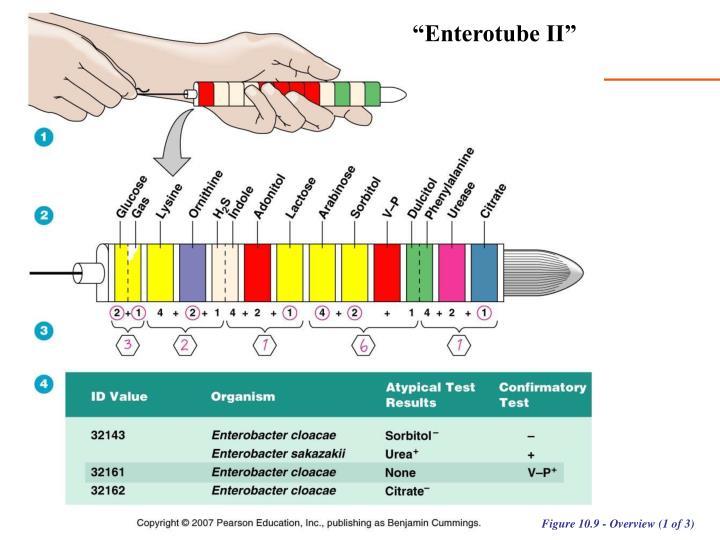 """""""Enterotube II"""""""