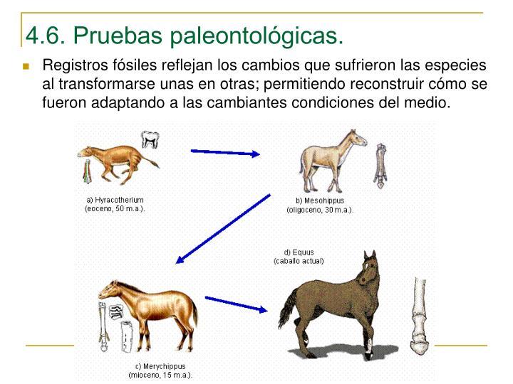 4.6. Pruebas paleontológicas.