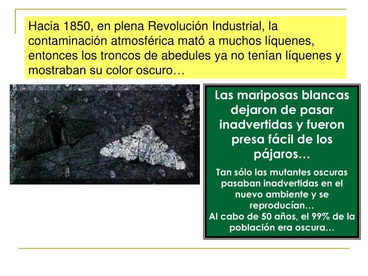 Hacia 1850, en plena Revolución Industrial, la contaminación atmosférica mató a muchos líquenes, entonces