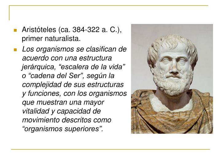 Aristóteles (ca. 384-322a.C.), primer naturalista.