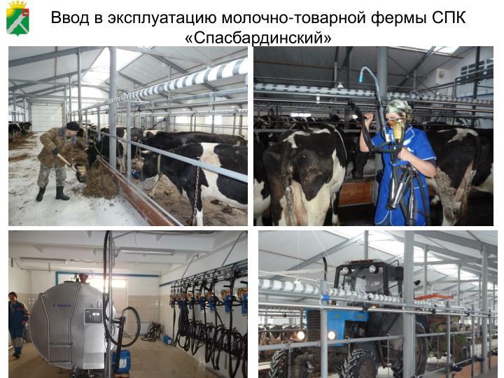 Ввод в эксплуатацию молочно-товарной фермы СПК «Спасбардинский»