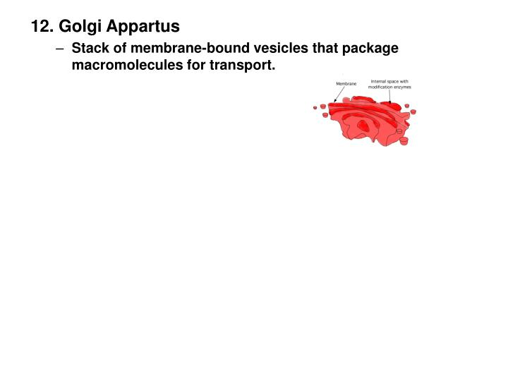 12. Golgi Appartus