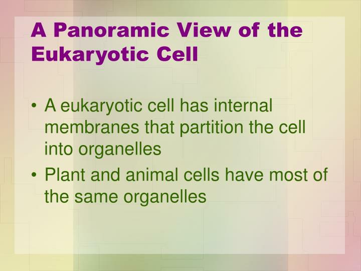 A Panoramic View of the Eukaryotic Cell