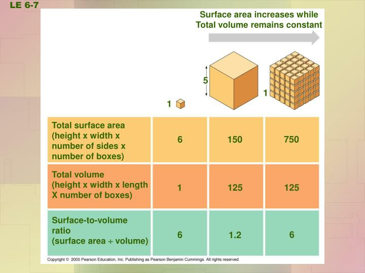 Surface area increases while