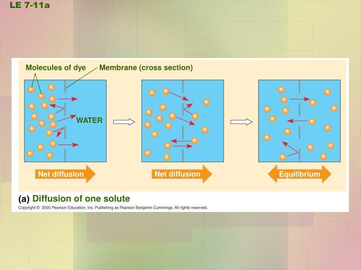 Molecules of dye