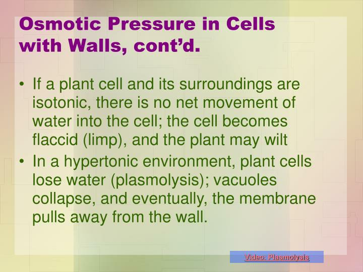 Osmotic Pressure in Cells with Walls, cont'd.