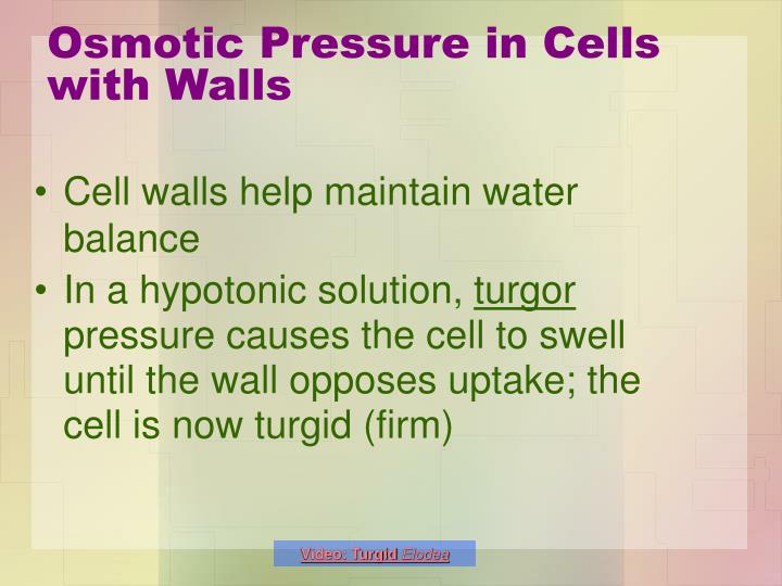 Osmotic Pressure in Cells with Walls