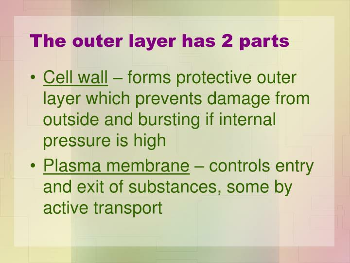 The outer layer has 2 parts