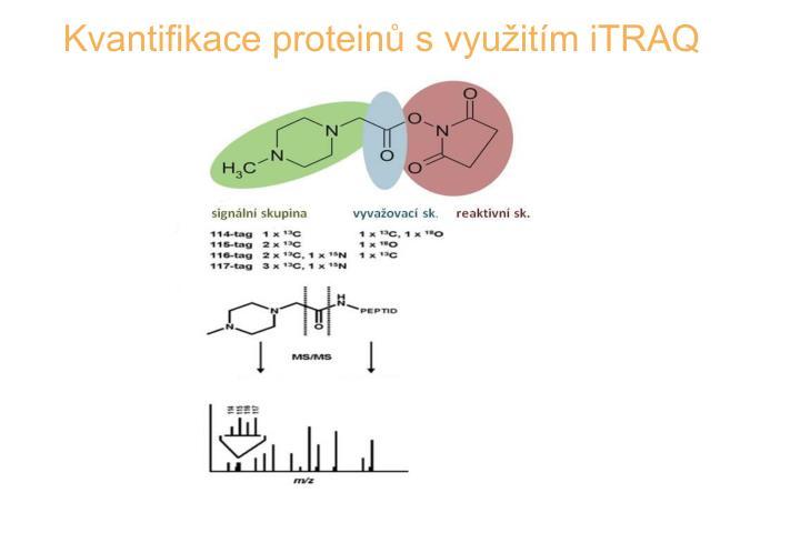 Kvantifikace proteinů s využitím iTRAQ