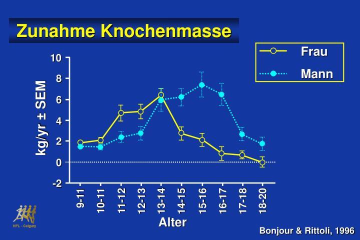 Zunahme Knochenmasse