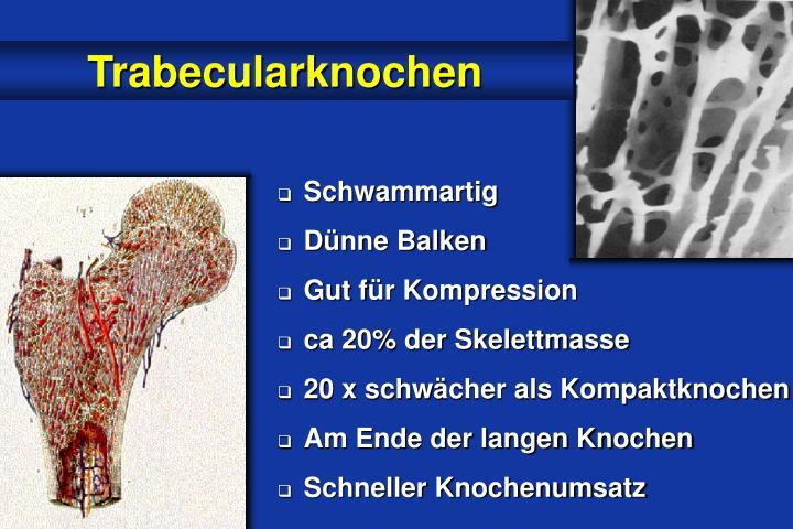 Trabecularknochen