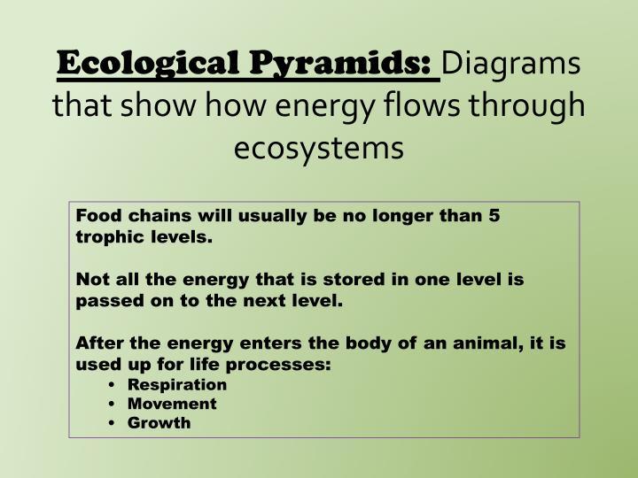 Ecological Pyramids: