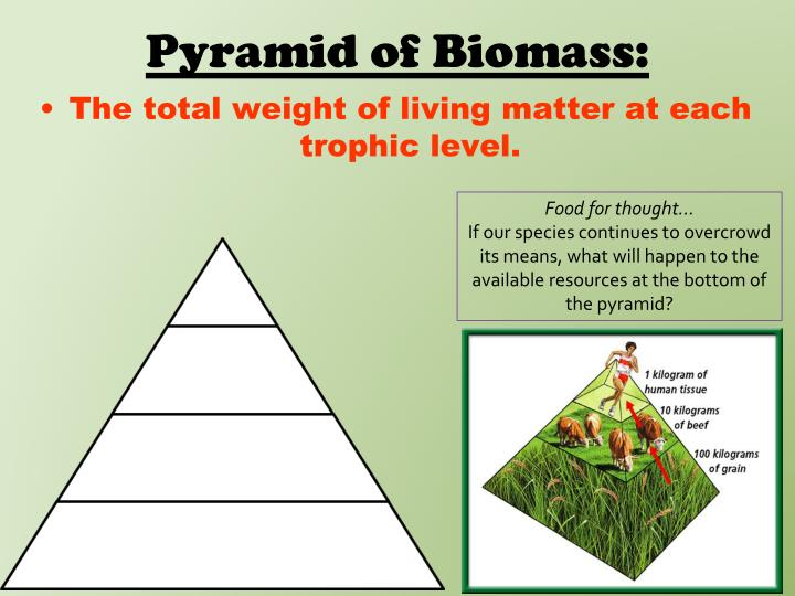 Pyramid of Biomass: