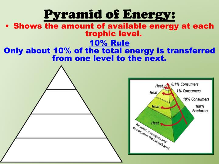 Pyramid of Energy: