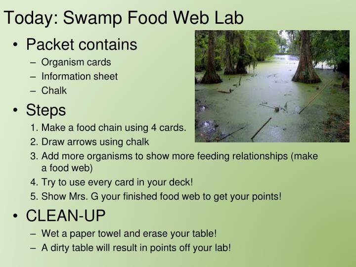 Today: Swamp Food Web Lab