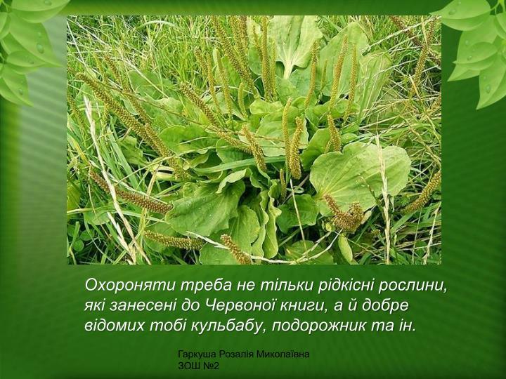 Охороняти треба не тільки рідкісні рослини, які занесені до Червоної книги, а й добре відомих тобі кульбабу, подорожник та ін.