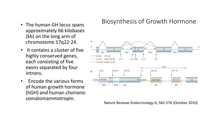 Biosynthesis of Growth Hormone