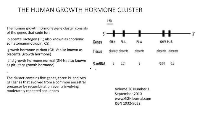 THE HUMAN GROWTH HORMONE CLUSTER