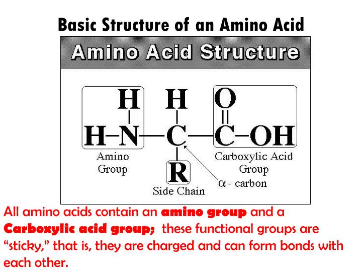 Basic structure of an amino acid