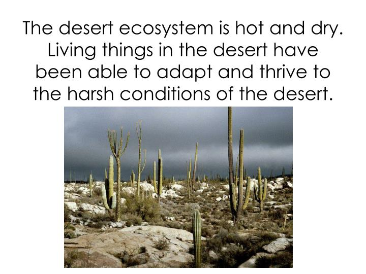 The desert ecosystem is hot and dry.