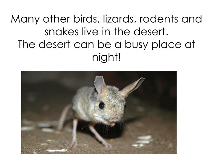 Many other birds, lizards, rodents and snakes live in the desert.