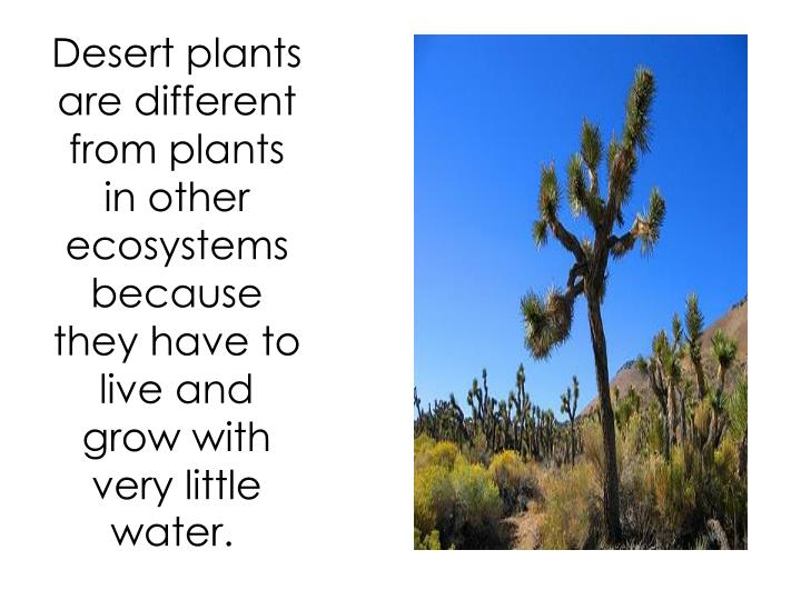 Desert plants are different from plants in other ecosystems because they have to live and grow with very little water.
