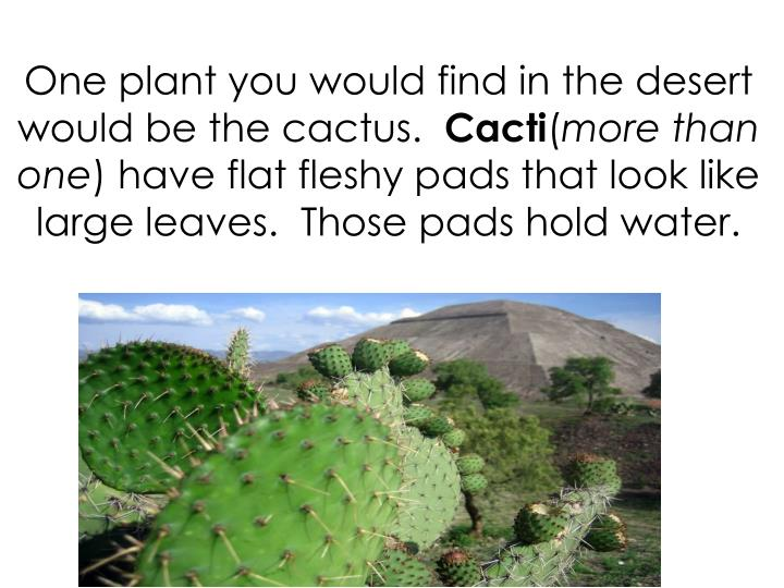One plant you would find in the desert would be the cactus.