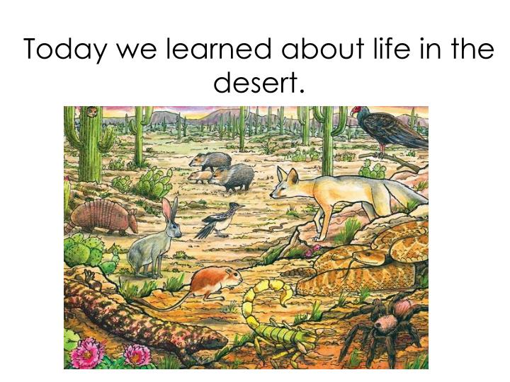 Today we learned about life in the desert.
