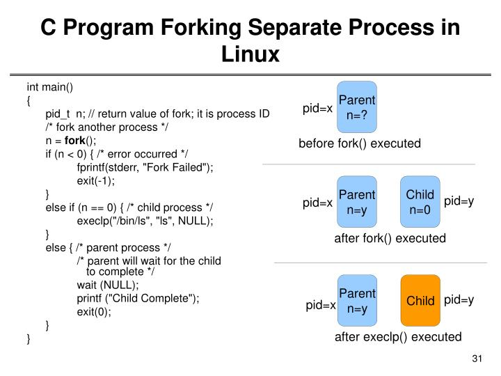 C Program Forking Separate Process in Linux