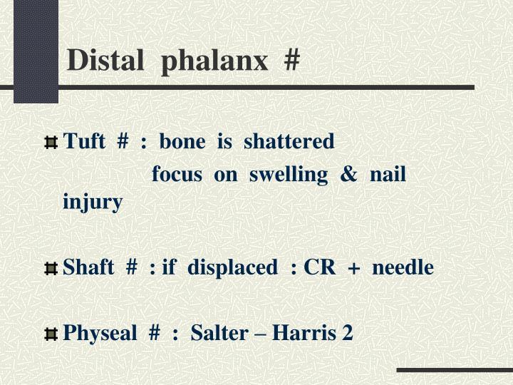 Distal  phalanx  #