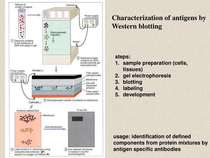 Characterization of antigens by