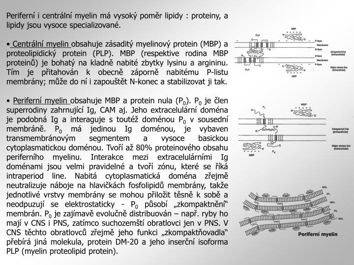 Periferní myelin