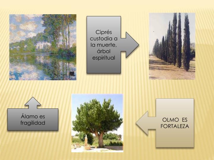 Ciprés custodia a la muerte, árbol espiritual