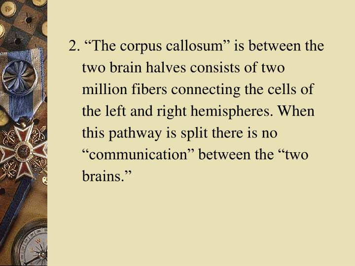 "2. ""The corpus callosum"" is between the two brain halves consists of two million fibers connecting the cells of the left and right hemispheres. When this pathway is split there is no ""communication"" between the ""two brains."""